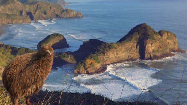 Doch noch glücklich: Kiwi mit Flugzeug in die Luft