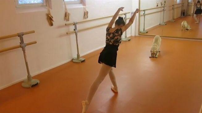 Krasser Dance-Battle: Baletttänzerin vs. Labrador