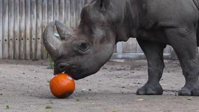 Keiner kommt zu kurz: Spielzeug im Lincoln Park Zoo