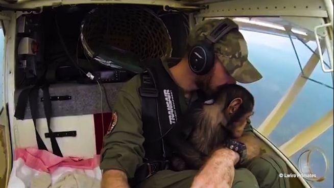 Süßer Copilot: Schimpanse vor Wilderern gerettet