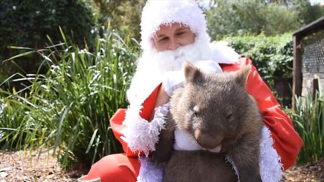 Weihnachtsmann in Gefahr: Santas Geschenke im Zoo