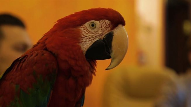 Papagei mit Visionen: Roter Vogel empfiehlt die besten Reisen