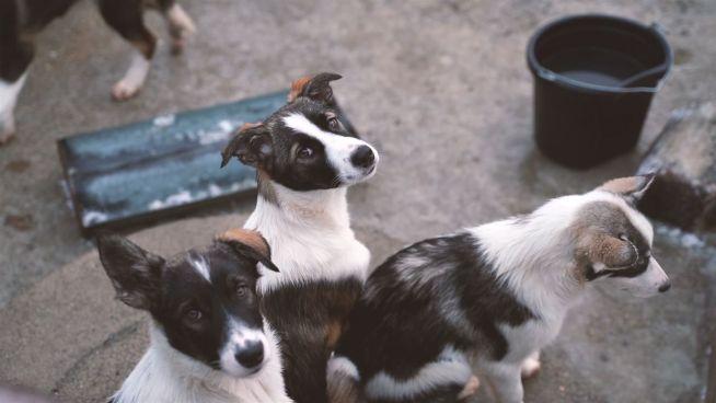 Entfliehe dem Alltag: Die Husky-Lodge in Finnland